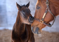 2009 Sharp Humor filly out of Impulse Shopper