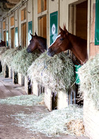 Tom Bush stables at Belmont