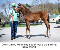 2018 Malibu Moon filly out of Wake Up Smiling born 2_6_18 - 2