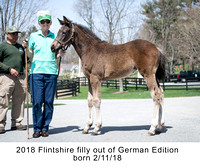 2018 Flintshire filly out of German Edition born 2_11_18 - 2