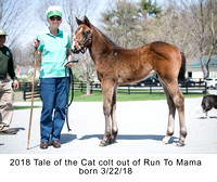 2018 Tale of the Cat colt out of Run To Mama born 3_22_18 - 1