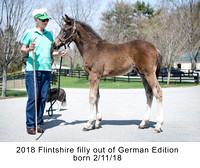 2018 Flintshire filly out of German Edition born 2_11_18 - 1