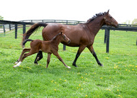 2009 Bluegrass Cat colt out of Then She Laughs